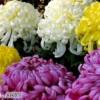 お葬式のしきたりと和の作法(3)