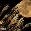 「十五夜」「中秋の名月」の奇妙な風習